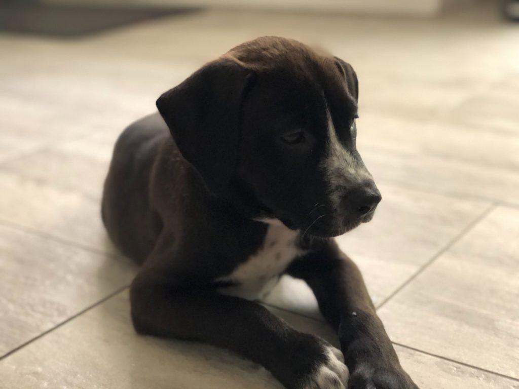 Brody at 12 weeks